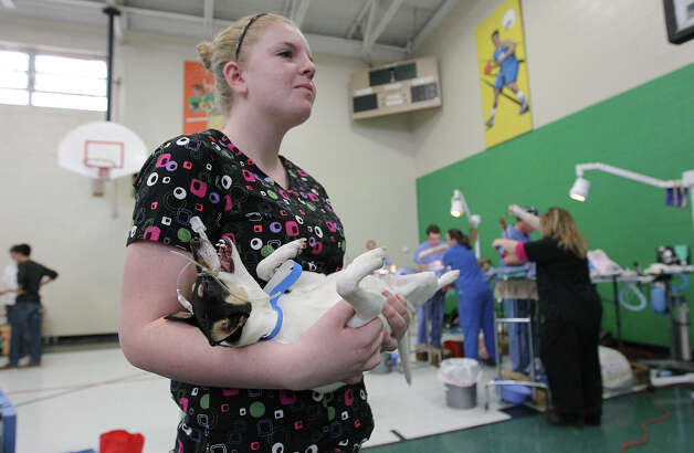 "Volunteer Emily Oliver holds Ariel, a fox terrier, while waiting for an open surgical table at SNIPSA's The Big Fix free spay and neuter clinic at Miller's Pond Community Center on Saturday, Mar. 2,  2013. Over 250 pets were taken in at the clinic that was co-sponsored by the city and by SNIPSA. Veterinarians, vet techs and volunteers converted a gym into a make-shift animal surgical hospital taking in cats and dogs from the area. Veterinarians Shannon and Bob Espy started the program in 2005 in San Antonio. More clinics are planned for the year and pet owners can find information from SNIPSA.org or through the city's Animal Care Services website. The next clinic is planned for April and July according to Espy. SNIPSA's mission is to ""rescue, rehabilitate and re-home adoptable animals"" and ""encourage responsibility within the pet owning population"" according to the website. Photo: Kin Man Hui, San Antonio Express-News / © 2012 San Antonio Express-News"