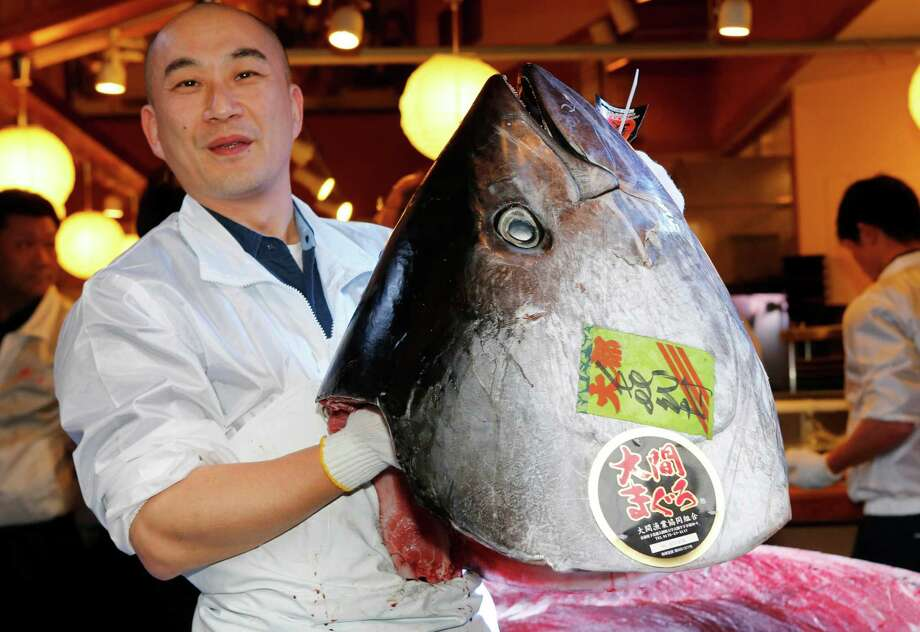 In this Jan. 5, 2013 file photo, an employee of Kiyomura Co., poses with a head of a bluefin tuna at Sushi Zanmai restaurant near Tsukiji fish market in Tokyo.  Catching bluefin tuna is a lucrative business. A single full-grown specimen can sell for 2 million yen, or $20,000, at Tokyo's sprawling Tsukiji fish market. Japanese fishermen are vying with Korean, Taiwanese and Mexican fisherman for a piece of a $900 million wholesale market. Photo: AP
