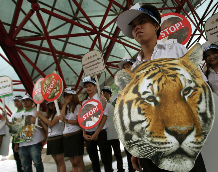 "Thai activists hold posters urging people to stop the trading of tigers during the Convention on International Trade in Endangered Species, or CITES,  in Bangkok on Sunday. How to slow the slaughter and curb the trade in ""blood ivory"" will be among the most critical issues up for debate at the 177-nation Convention on International Trade in Endangered Species, or CITES, that gets under way Sunday in Bangkok. And the meeting's host, Thailand, will be under particular pressure to take action. Photo: AP"