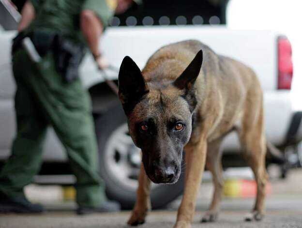 A U.S. Customs and Border Patrol agent and K-9 security dog keep watch at a checkpoint station, Friday, Feb. 22, 2013, in Falfurrias, Texas. Photo: AP