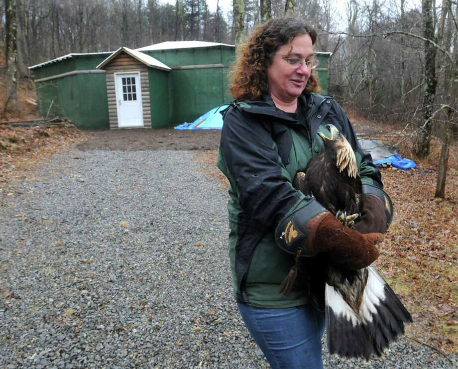 This photo taken Feb. 26, 2013 shows Wendy Perrone carrying a one-year-old golden eagle from the Three Rivers Avian Center's barn to the clinic building where the bird will be outfitted with a transmitter. Photo: AP
