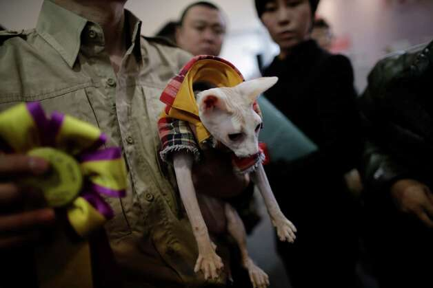 An awarded cat is taken to the stage by a worker at Shanghai Pet Fair on Friday in Shanghai, China. Photo: AP