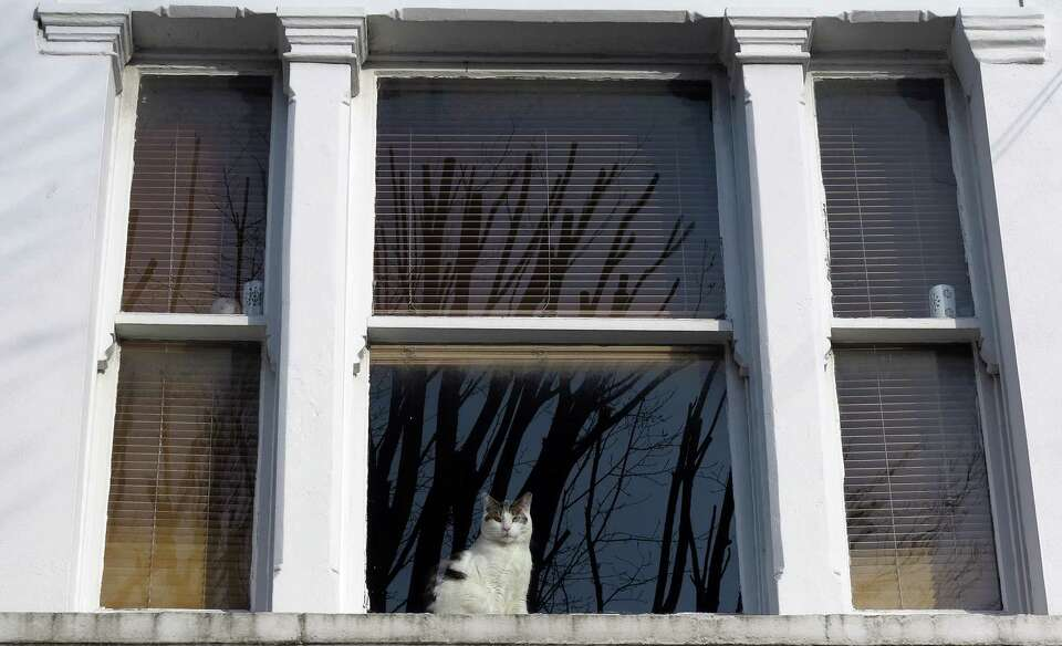 A cat looks through a window in a house in London, Thursday. The London zoo is taking stock of an an