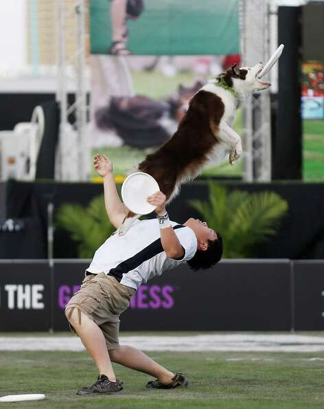 In this image provided by Purina Pro Plan, Purina hosts the Purina Pro Plan Incredible Dog Challenge