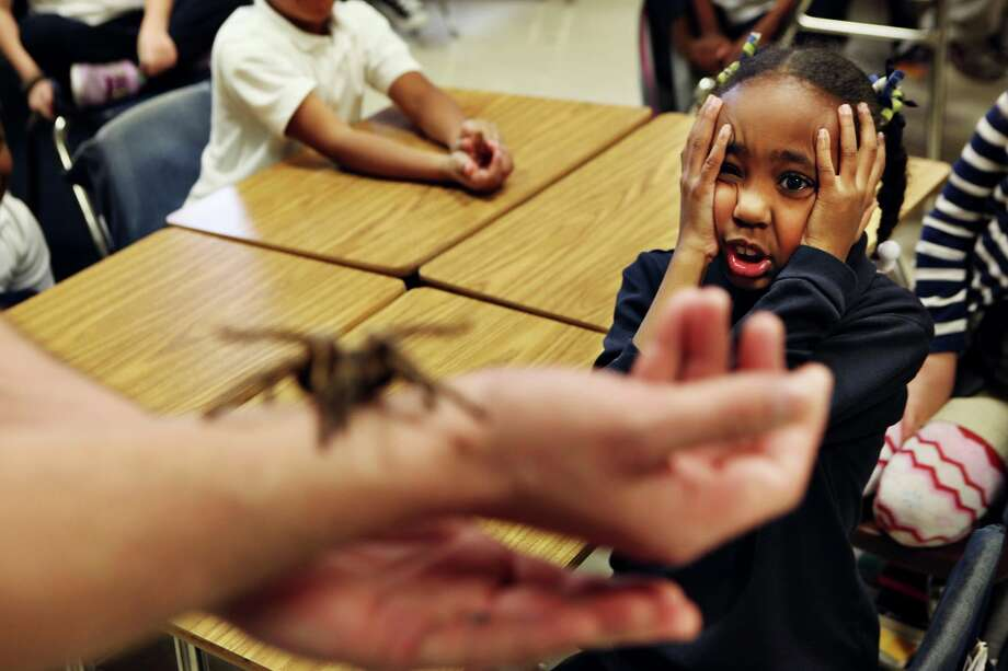 "Idlewild second grader Sydney Berry acts nervous as Preston Warford of Terminix shows off ""Legs,"" a tarantula, during a presentation Warford made to the students about bugs and how they can be beneficial to the ecosystem at the Memphis, Tenn., school on Friday in Memphis. Photo: AP"