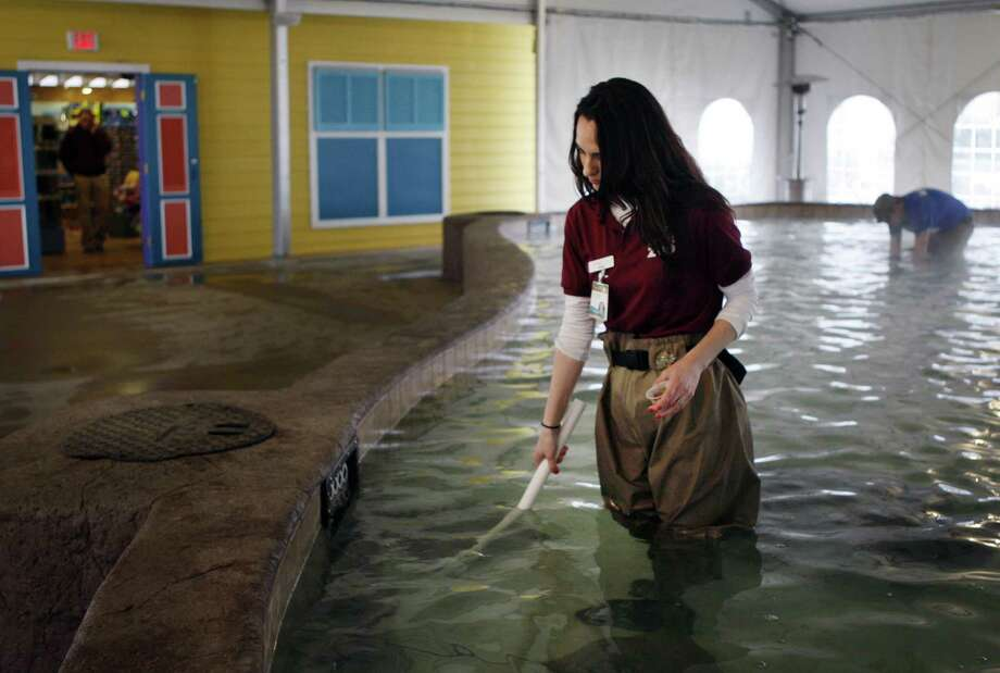 Emily Burford feeds a shark at the new stingray bay exhibit at the Memphis Zoo in Memphis, Tenn., Friday. Photo: AP