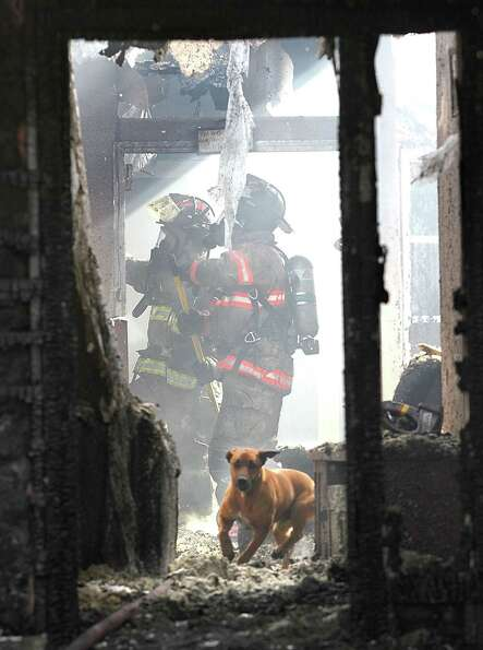 A confused and frightened family dog runs past firefighters Friday inside a smoldering and smoking h