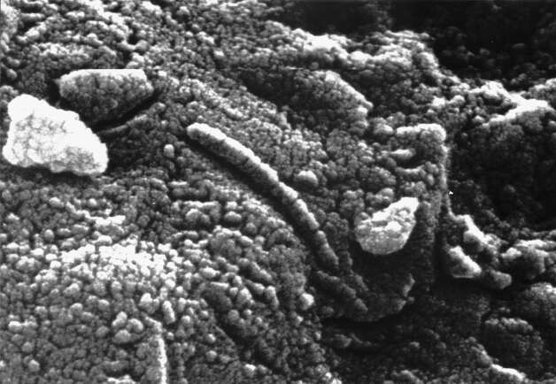 """Martian meteorite Alh84001. """"Does it carry microbial fossils from Mars or are its strange features just the product of some unique geochemistry? After almost 20 years, dueling papers are still coming out, and the opposing parties are no closer to a resolution,"""" reports Astrobiology magazine. Photo: Encyclopaedia Britannica, Multiple / Universal"""