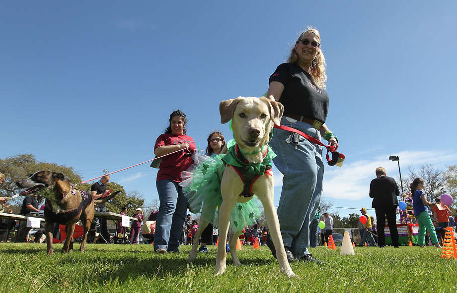 "Christine Saalbach and ""Thurber"" compete in the 5th annual Purim Pet Parade at the Barshop Jewish Community Center, Sunday, March 3, 2013. Proceeds from the event benefitted the National Council of Jewish Women and the San Antonio Humane Society Photo: Jerry Lara, San Antonio Express-News / ©2013 San Antonio Express-News"