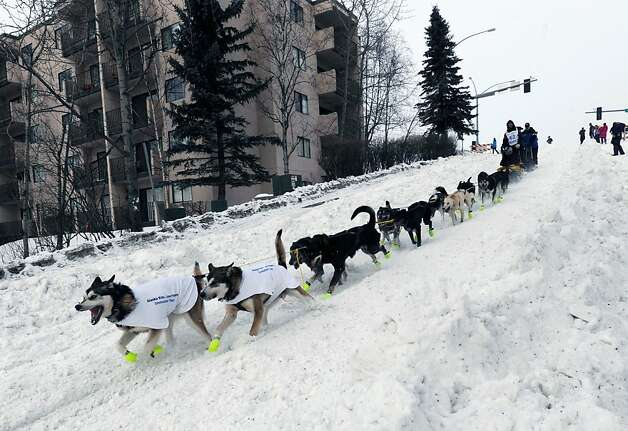 Brent Sass drives his dog team down the Cordova Street hill during the ceremonial start of the Iditarod Trail Sled Dog Race on Saturday, March 2, 2013, in Anchorage, Alaska. The competitive portion of the 1,000-mile race is scheduled to begin Sunday in Willow, Alaska. (AP Photo/Anchorage Daily News, Bill Roth) Photo: Bill Roth, Associated Press