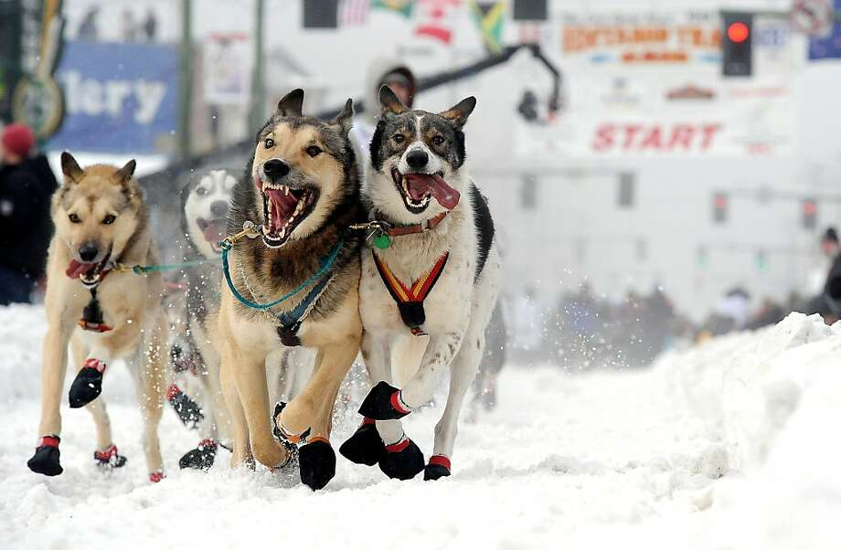 Cim Smyth drives his dog team at the ceremonial start of the Iditarod Trail Sled Dog Race on Saturday, March 2, 2013, in Anchorage, Alaska. The competitive portion of the 1,000-mile race is scheduled to begin Sunday in Willow, Alaska. Photo: Bob Hallinen, Associated Press