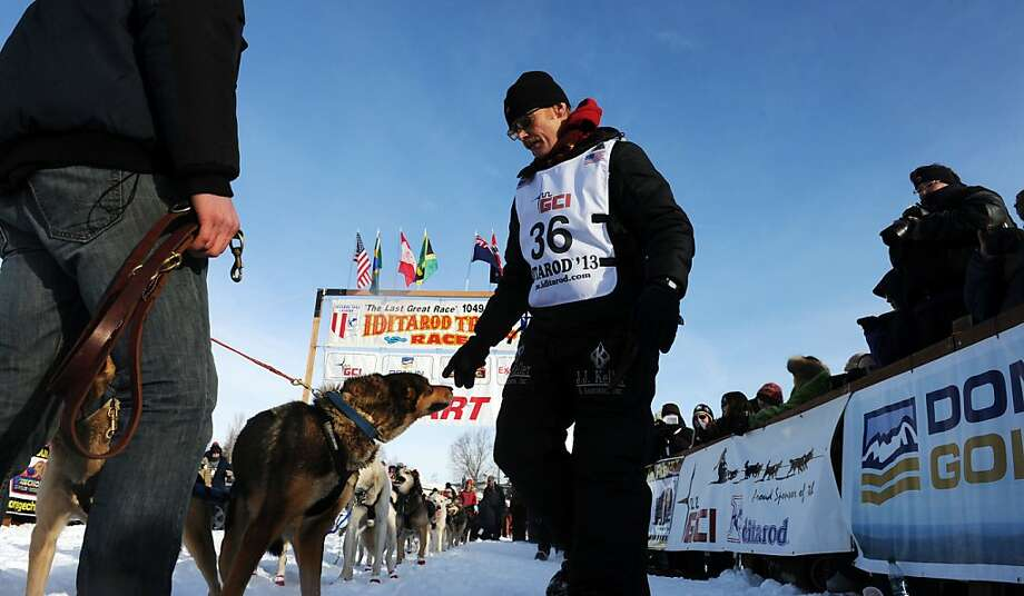 Mitch Seavey walks to the head of his team at the starting line for the Iditarod Trail Sled Dog Race, Sunday, March 3, 2013, in Willow, Alaska. 65 teams will be making their way through punishing wilderness toward the finish line in Nome on Alaska's western coast 1,000 miles away.  Photo: Bob Hallinen, Associated Press