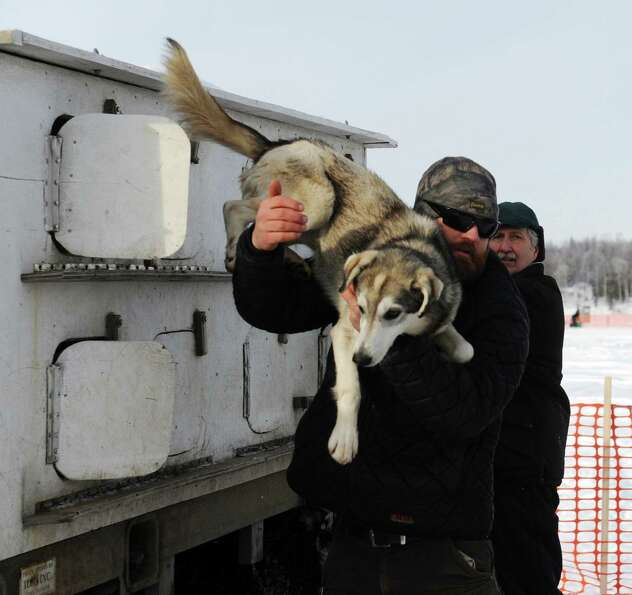 James Volek pulls one on his dogs out of a truck before the Iditarod Trail Sled Dog Race, Sunday, Ma