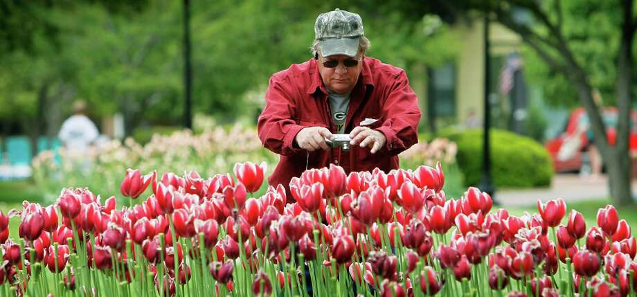 FILE - This May 6, 2010 file photo shows Bud Moe, of Barron, Wisc., takeing pictures of tulips on display during the annual Pella Tulip Time festival in Pella, Iowa. The bloom season is one of a number around the country this spring celebrating flowers in season.  (AP Photo/Charlie Neibergall, file) Photo: Charlie Neibergall, Associated Press / AP
