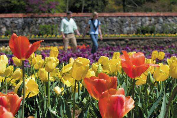 This undated photo provided by the Biltmore Estate shows the grounds in bloom during the annual Biltmore Blooms festival, a historic attraction in Asheville, N.C., which this year takes place March 21-May 31. The event is one of a number of festivals and shows around the country showcasing spring flowers. (AP Photo/The Biltmore Company)