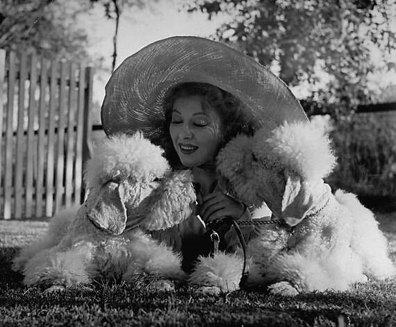 Actress Greer Garson cuddling her two white standard poodles. Photo: Peter Stackpole, Time Life Pictures/Getty Images