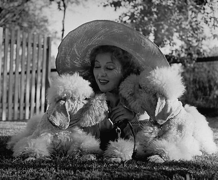 Actress Greer Garson cuddling her two white standard poodles.