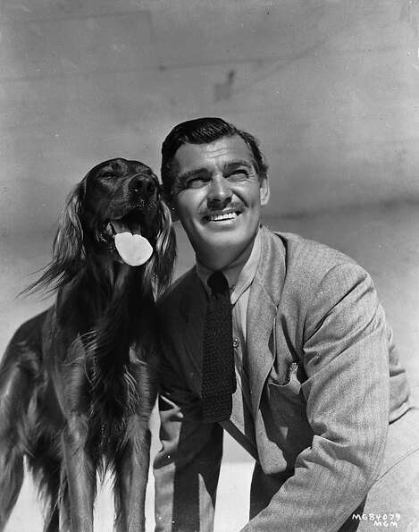 American actor Clark Gable posing with a red setter in 1941. Proof that dogs look like their owners