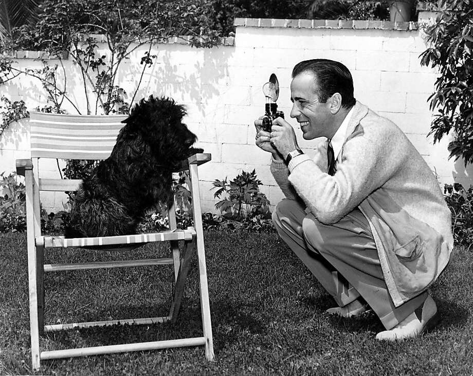 Humphrey Bogart takes a picture of his pet dog Sluggy. Photo: Popperfoto, Getty Images