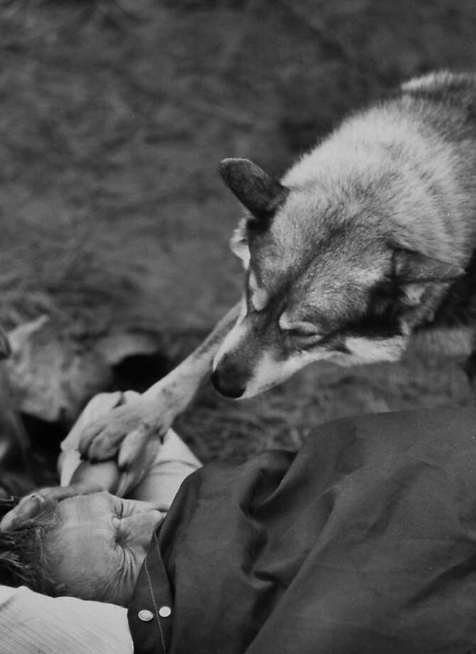 Actor Steve McQueen is roused from sleep by his pet malamute during hunting trip in Sierra Madre Mountains.  Photo: John Dominis, Time Life Pictures/Getty Images