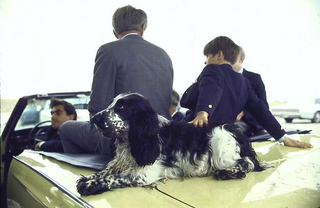 Presidential contender Bobby Kennedy with two of his sons and pet dog Freckles sit in open convertible during campaign event. Photo: Bill Eppridge, Time Life Pictures/Getty Images