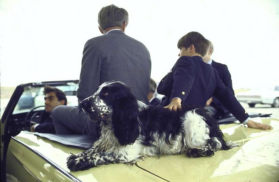 Presidential contender Bobby Kennedy with two of his sons and pet dog Freckles sit in open convertib