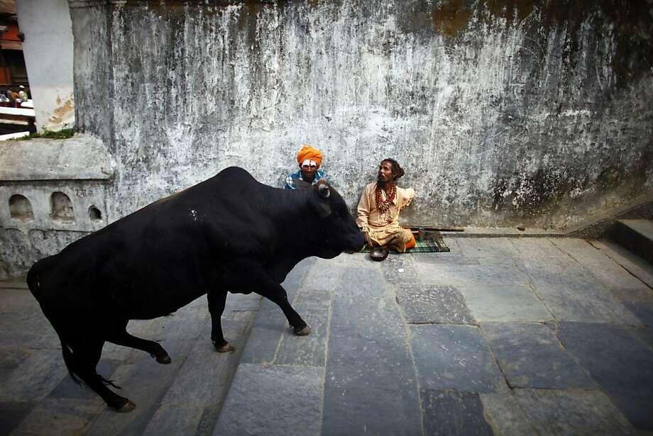 Hindu holy men sit inside the premises of Pashupatinath Temple in Katmandu, Nepal, Monday, March 4, 2013. Hindus across the world will be celebrating Mahashivratri, or Shiva's night festival on March 10, believed to be the day when Shiva got married. Photo: Niranjan Shrestha, Associated Press