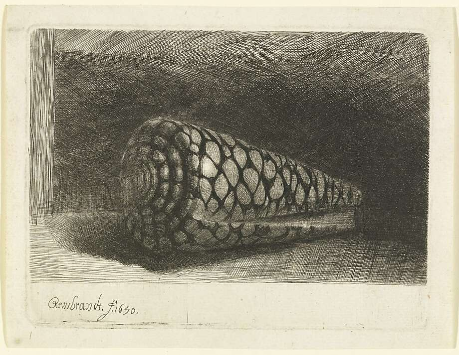 "Rembrandt's ""The Shell (Conus Marmoreus)"" is part of the exhibit at the de Young. Photo: Unknown"