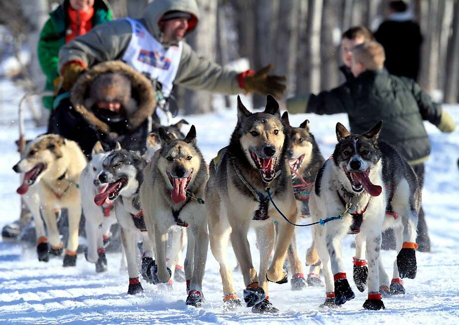 Cim Smith greets fans during the ceremonial start of the Iditarod Trail Sled Dog Race Saturday, March 2, 2013, in Anchorage, Alaska. The competitive portion of the 1,000-mile race is scheduled to begin Sunday in Willow, Alaska. (AP Photo/Dan Joling) Photo: Dan Joling, Associated Press
