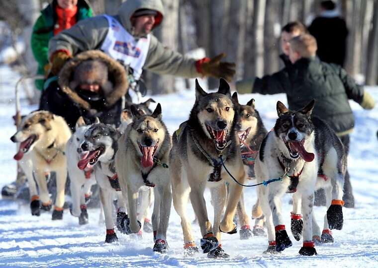 Cim Smith greets fans during the ceremonial start of the Iditarod Trail Sled Dog Race Saturday, Marc