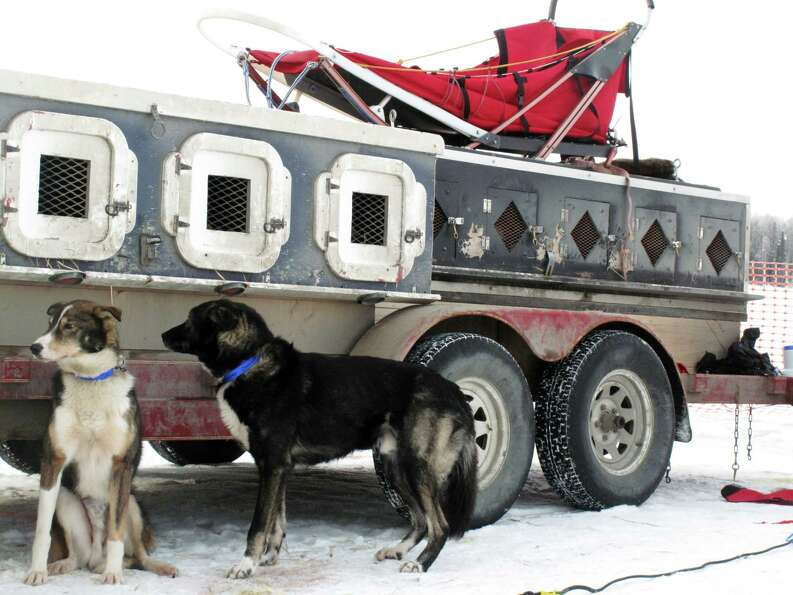 Dog wait to run in the Iditarod Trail Sled Dog Race, Sunday, March 3, 2013, in Willow, Alaska. 65 te