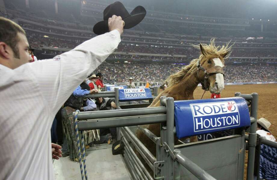 A horse stands on its hind legs and knocks off the cowboy right before the Saddle Bronc Competition during the BP Super Series III Championship at Reliant Stadium on Tuesday, March 5, 2013, in Houston. Photo: Mayra Beltran, Houston Chronicle / © 2013 Houston Chronicle