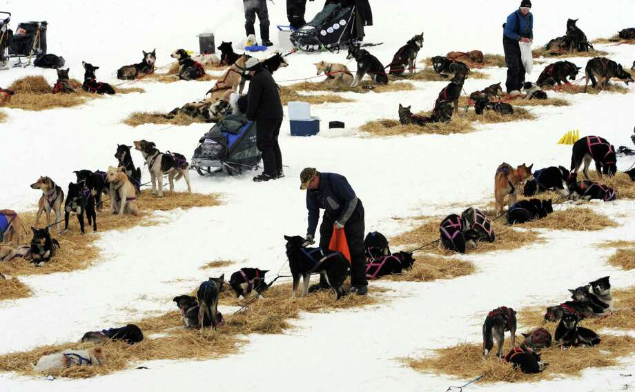 Musher Sonny Lindner snacks his dogs at the Finger Lake checkpoint in Alaska during the Iditarod Trail Sled Dog Race on Monday, March 4, 2013. Photo: Bill Roth, Associated Press / The Anchorage Daily News