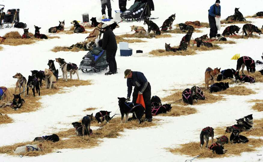 Musher Sonny Lindner snacks his dogs at the Finger Lake checkpoint in Alaska during the Iditarod Tra