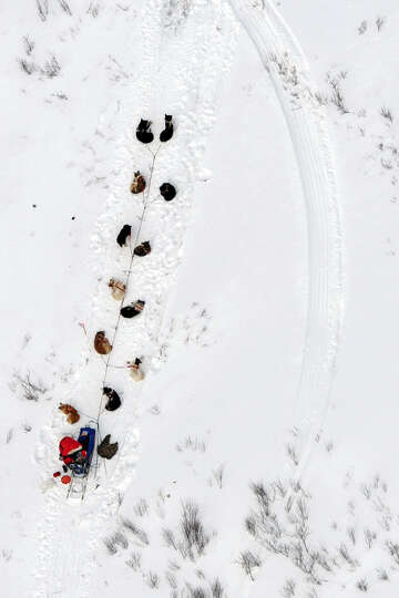 A musher and dog team rest between the Rohn and Nikolai checkpoints in Alaska during the Iditarod Tr