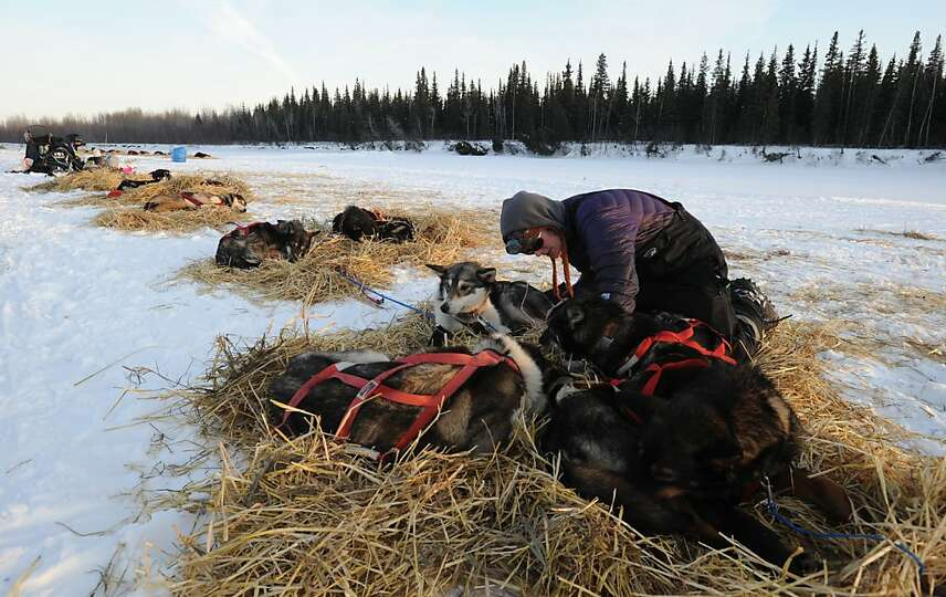 Paige Drobny of Fairbanks tends to her dog team in the Athabaskan village of Nikolai, Alaska, during