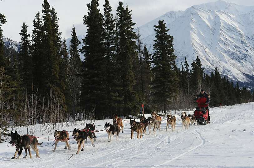 Iditarod musher Jan Steves drives her team along the airstrip at Rohn, Alaska, as she approaches the