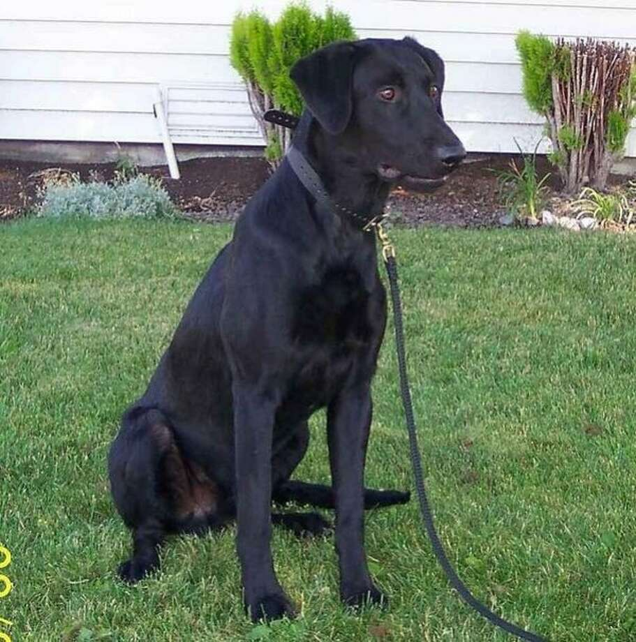 Trax, a police officer's dog, was poisoned. Photo: Richmond Police Department
