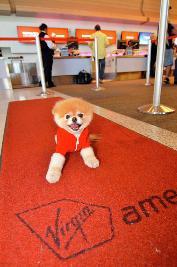 Boo will give pet-friendly travel advice to two and four-legged fliers. Photo: Virgin America / BENJAMIN EYE