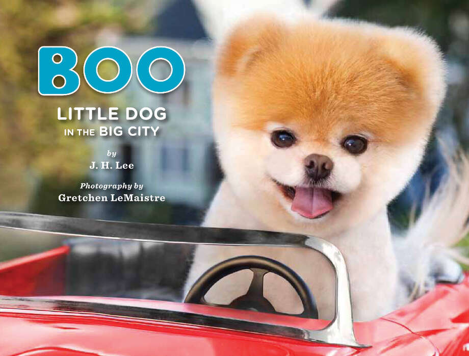 Images from the new book Boo: Little Dog, Big City which chronicles the daily life of one of the world's most adorable creatures. Photo: Chronicle Books