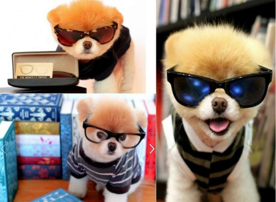 Boo, the World's cutest dog, has become the sponsor of a high-end designer sunglasses company named The Monocle Order.