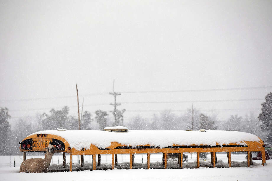 A llama seeks shelter next to an abandoned school bus at Cox Farms March 6, 2013 in Centreville, Virginia. A winter storm hit the Washington, DC area today with areas west of the city seeing significant snowfall, but the city itself seeing minimal snow. Photo: Win McNamee, Getty Images / 2013 Getty Images
