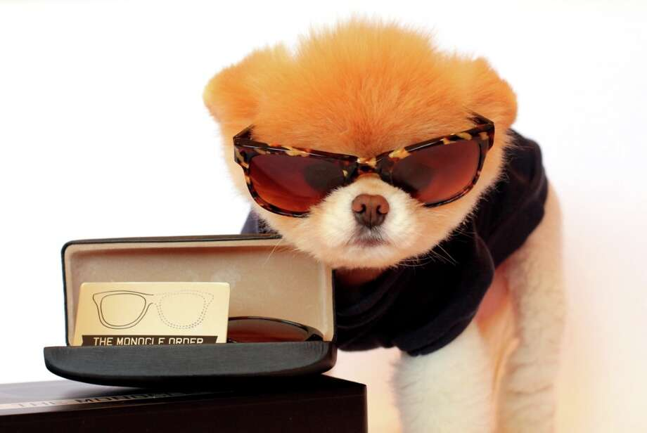 The glasses look cool on Boo, but they are actually made for humans.