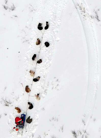 In this March 5, 2013 photo, s musher and dog team rest between the Rohn and Nikolai checkpoints in