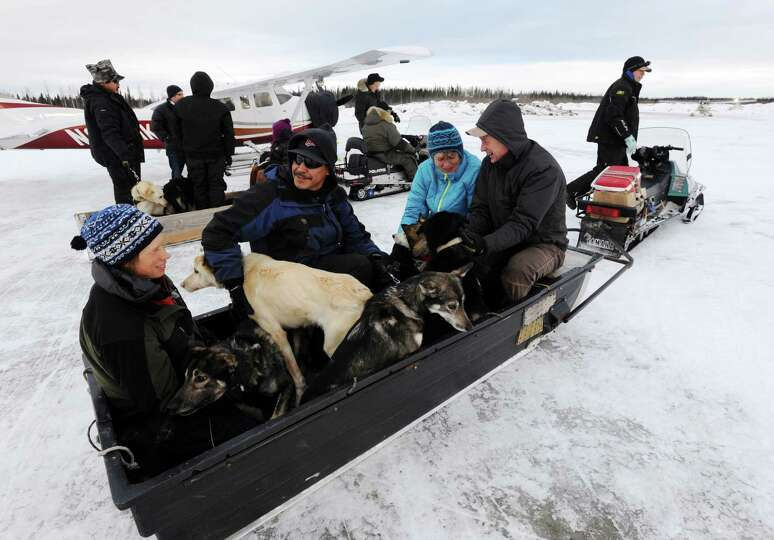 Volunteers bring dropped dogs to be loaded onto Iditarod Air Force planes and flown to McGrath durin