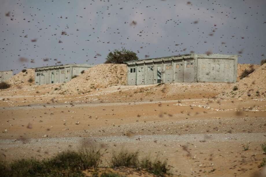 KMEHIN, ISRAEL - MARCH 06:  A Swarm of locusts moves over an Israeli army fire range near the Egyptian border on March 6, 2013 in Kmehin, Israel. Egypt and Israel have been swarmed with millions of locusts over the past few days causing wide spread disturbances. Photo: Uriel Sinai, Getty Images / 2013 Getty Images