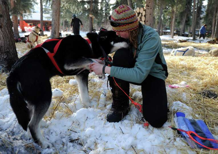 Angie Taggart tends to Carmack at the Rohn checkpoint in Alaska during the Iditarod Trail Sled Dog R