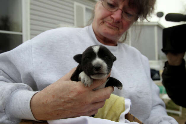 "Tra (cq) Coggin holds a puppy that was saved from a fire that took place early Thursday March 7, 2013 at a mobile home at the Cozy Cove Mobile Home and RV Park on the 5200 block of Crestway Drive. The fire caused about $60,000 in damages and the two occupants of the residence were not injured. The puppy's mother and several of its siblings perished in the fire. The puppy was named ""Skippy"" after the fire took place. Photo: JOHN DAVENPORT, SAN ANTONIO EXPRESS-NEWS / ©San Antonio Express-News/Photo may be sold to the public"