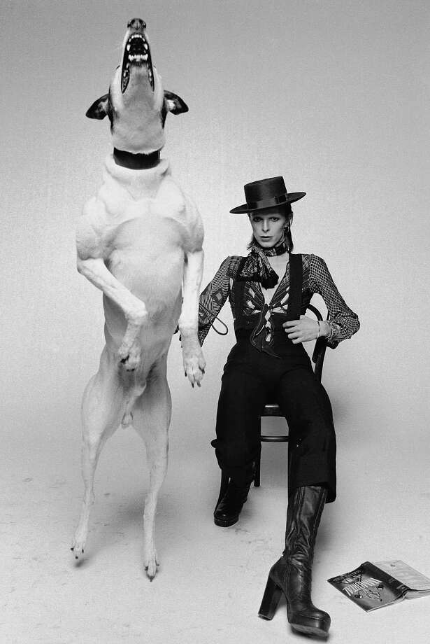 Singer David Bowie posing with a large barking dog while working on the artwork for his 1974 album 'Diamond Dogs' in London. Photo: Terry O'Neill, Getty Images / 2005 Getty Images