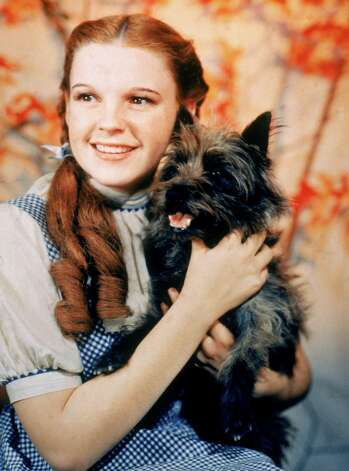 "Most of us think of the 1939 movie ""The Wizard of Oz"" as being the definitive film version. Judy Garland, of course, played Dorothy, shown here with Toto. Photo: MGM Studios, Getty Images / Moviepix"